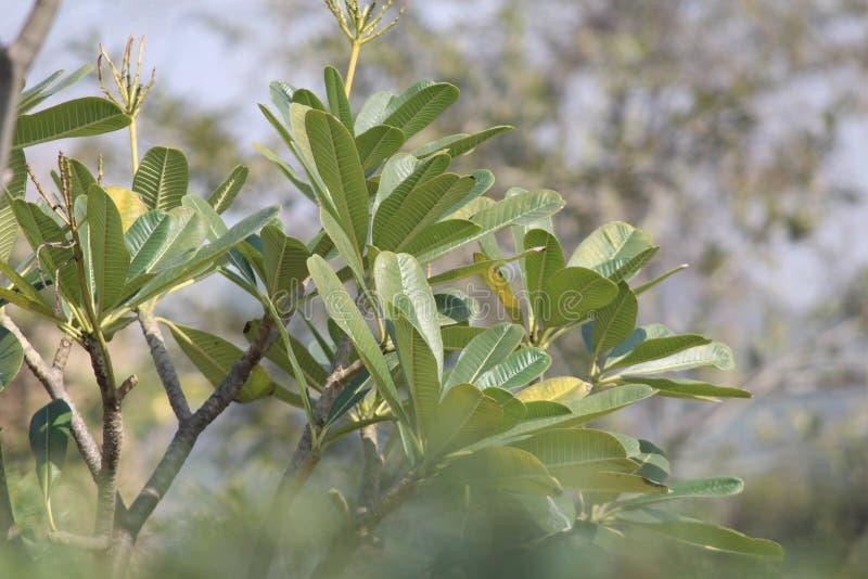greenery стоковое изображение
