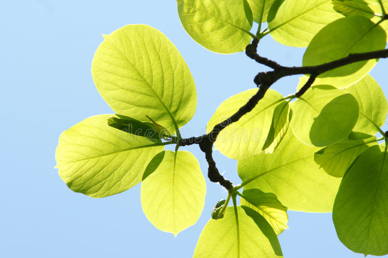 Download Greenery stock photo. Image of blue, sunshine, spring - 14240380