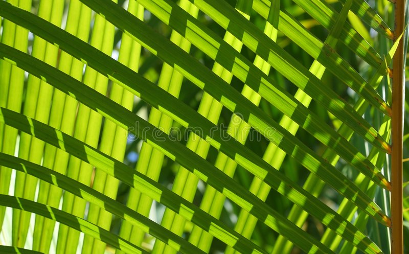 Greenery #3 royalty free stock image