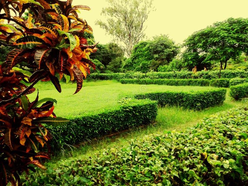 greenery fotos de archivo
