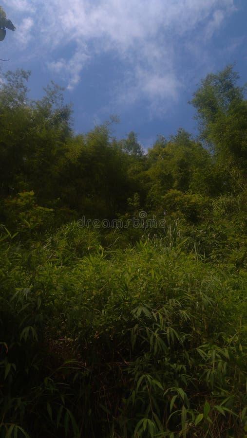 greenery foto de archivo