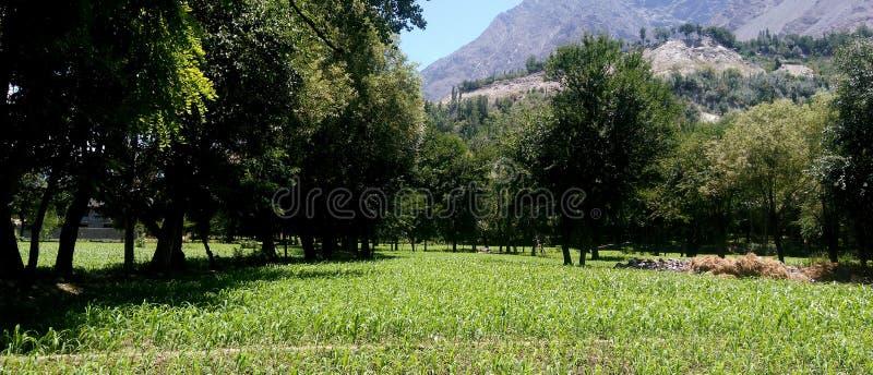 greenery fotografie stock libere da diritti