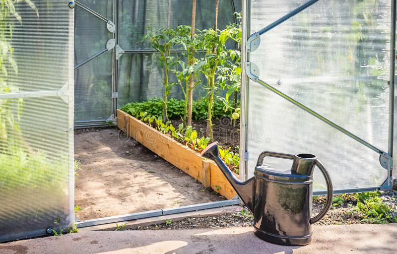 Greenhouse in back garden with open door and bailer. Greenery in back garden with open door royalty free stock photos
