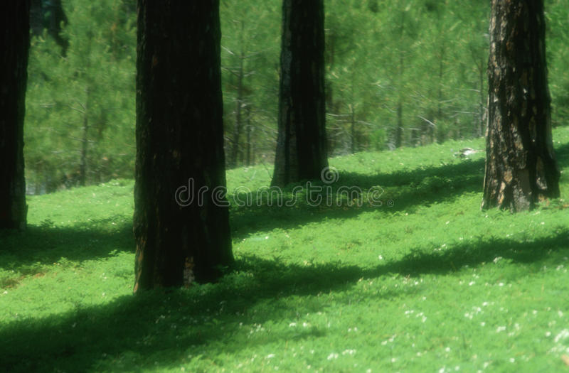 Download Greenery on forest floor stock photo. Image of photography - 23150108