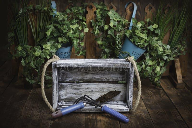 Greenery during gardening royalty free stock photography