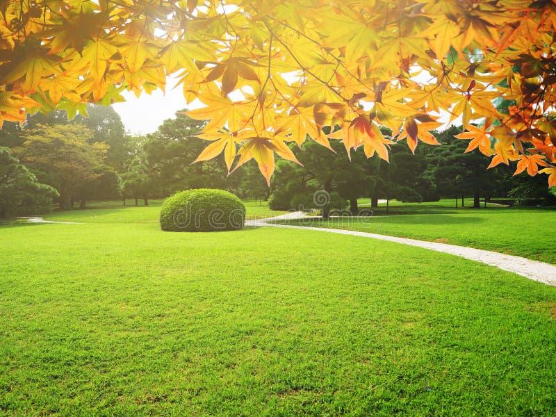 Greenery jard japończyka ogród zdjęcie stock