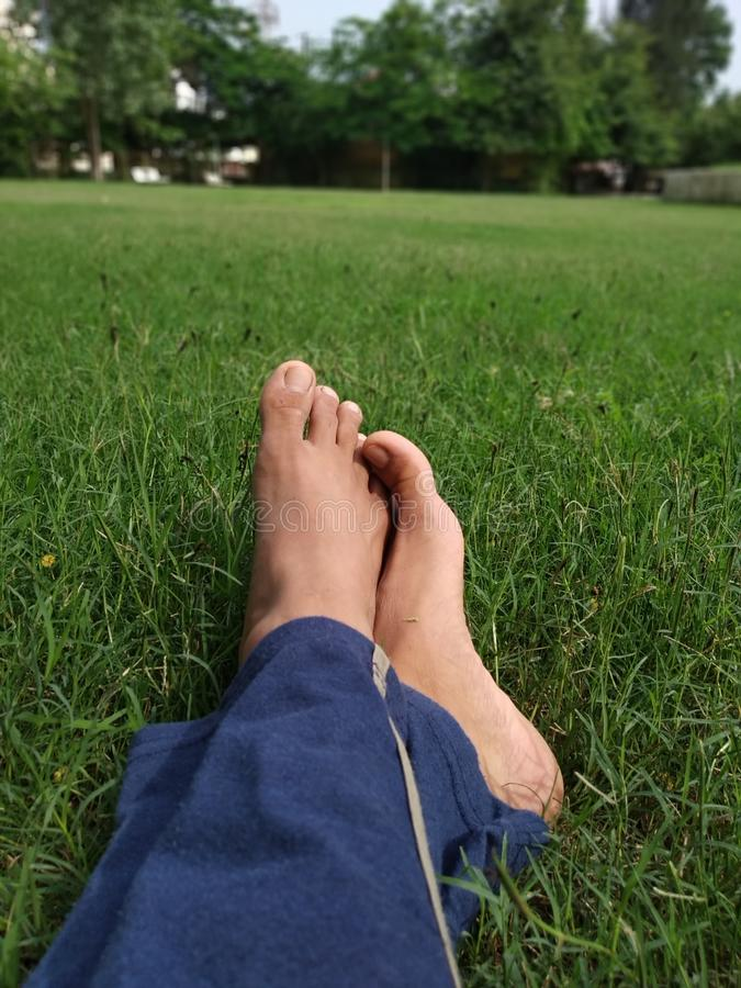 Greenery with lags. Foot, garden, park, nature, colour stock photo
