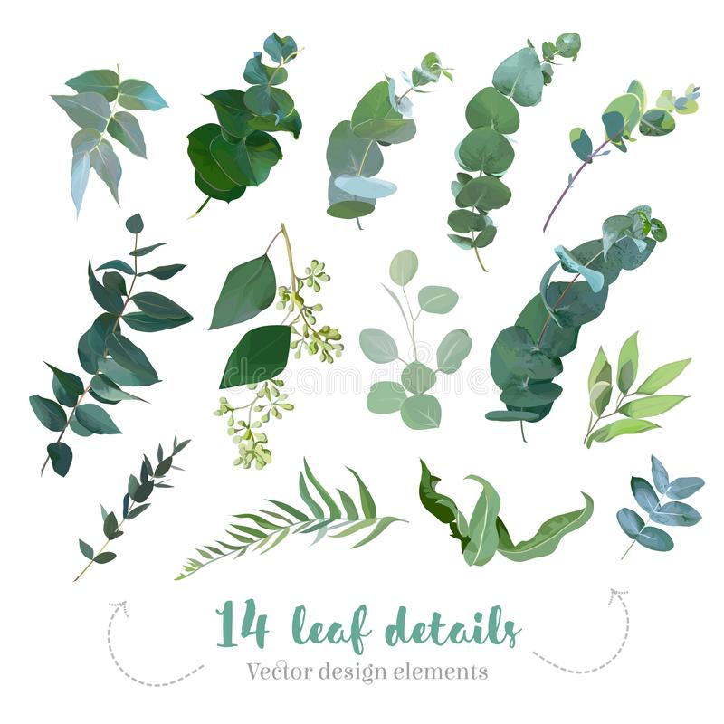 Greenery leaves vector big collection royalty free illustration