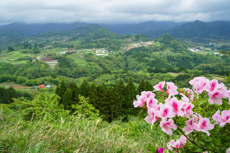 Greenery mountain panorama and town view from afar with pink flo stock photography