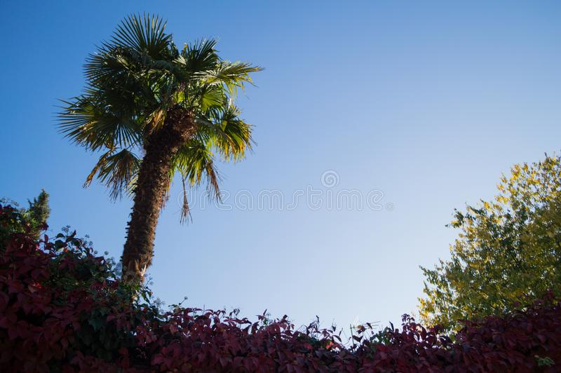 Greenery with Palm and Autumn Colors in Granada, Spain.  stock photos