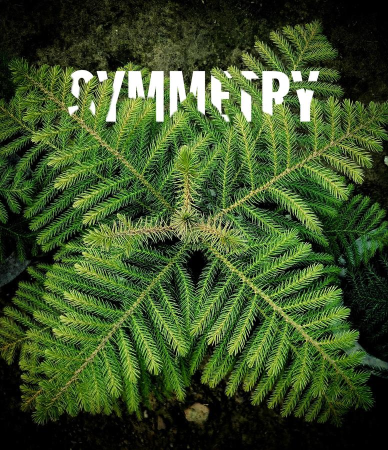 Greenery z symetrią obraz royalty free