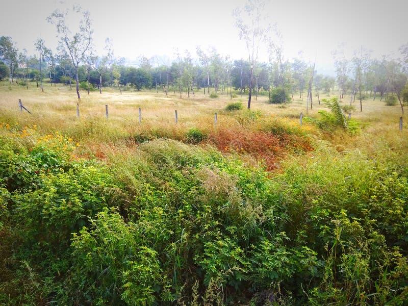 Greenery zasadza liść natury krajobraz zdjęcie stock