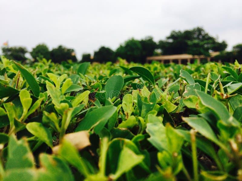 Greenest Greenery stock photography