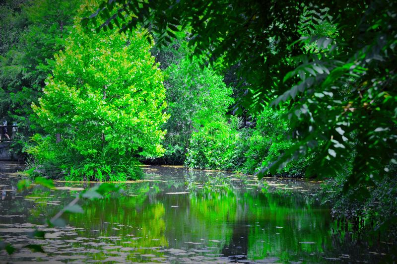 greenfield fotografia stock