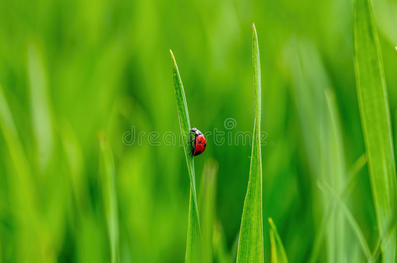 greenfield arkivfoton