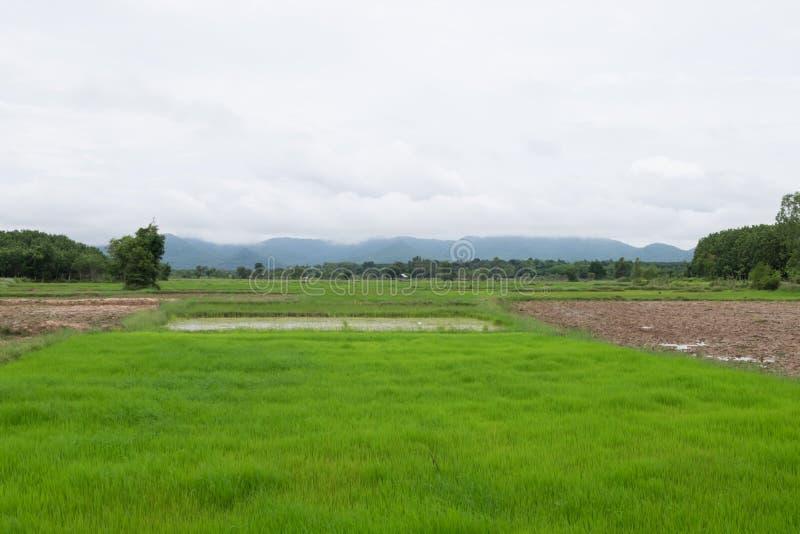 Greenfield krajobraz fotografia stock