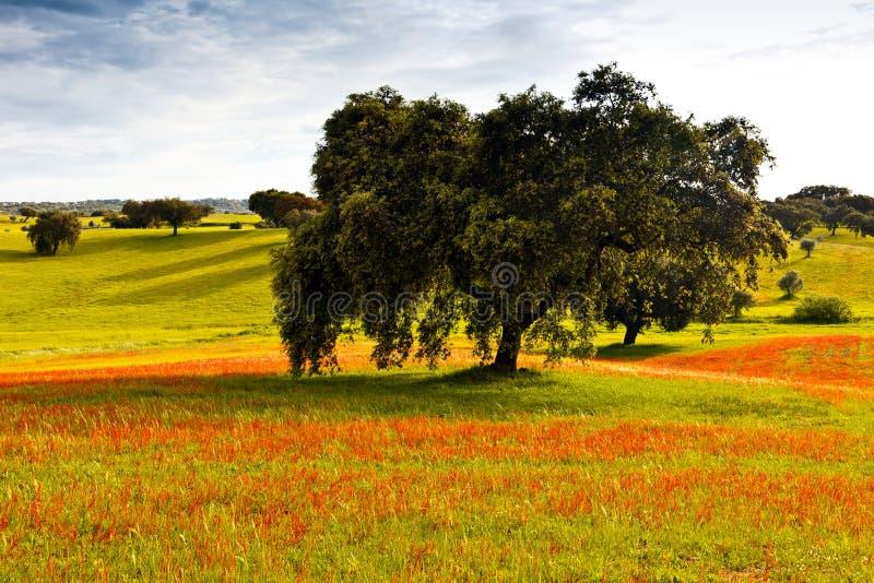 greenfield początkująca wiosna fotografia royalty free