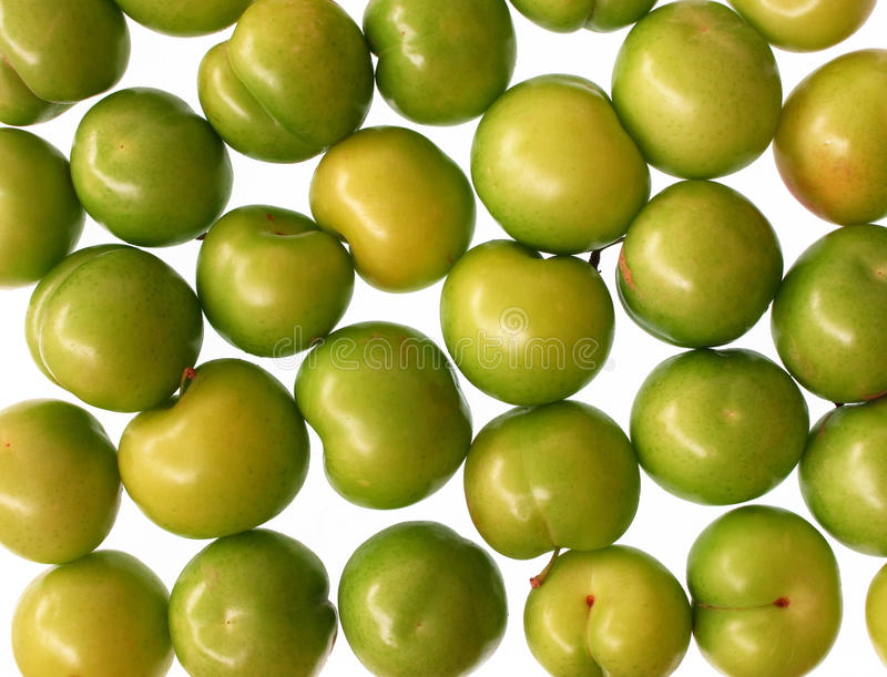 Download Greengages stock image. Image of plant, close, closeup - 9986039