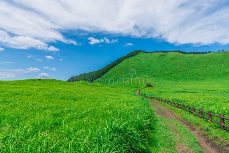 Greengrass no platô de Soni, Nara Prefecture, Japão fotos de stock royalty free