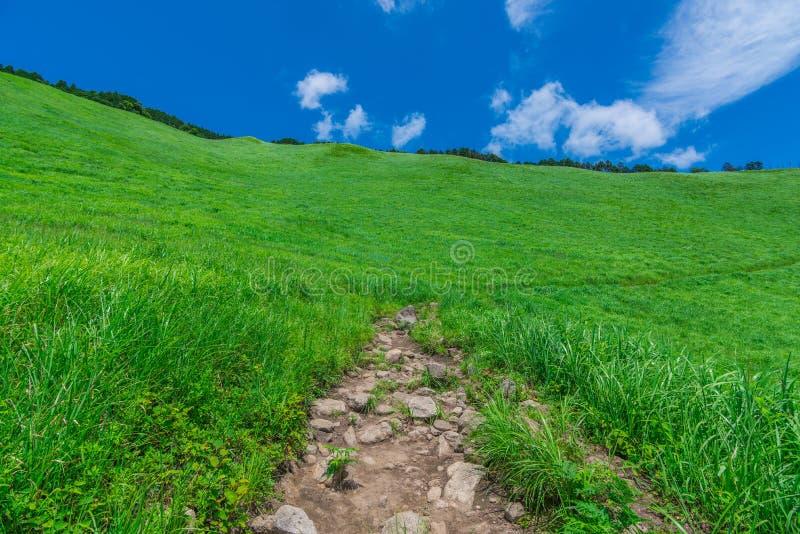 Greengrass no platô de Soni, Nara Prefecture, Japão fotos de stock