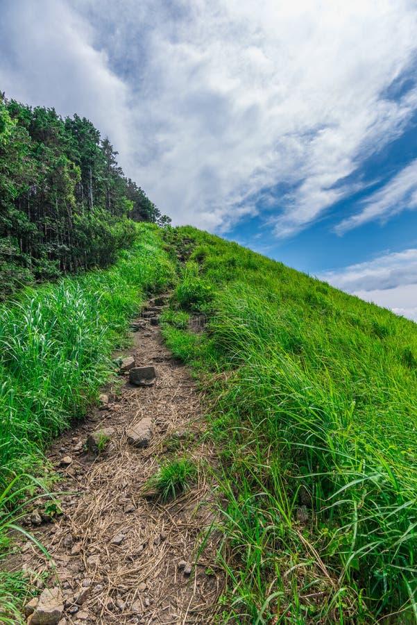 Greengrass no platô de Soni, Nara Prefecture, Japão imagem de stock