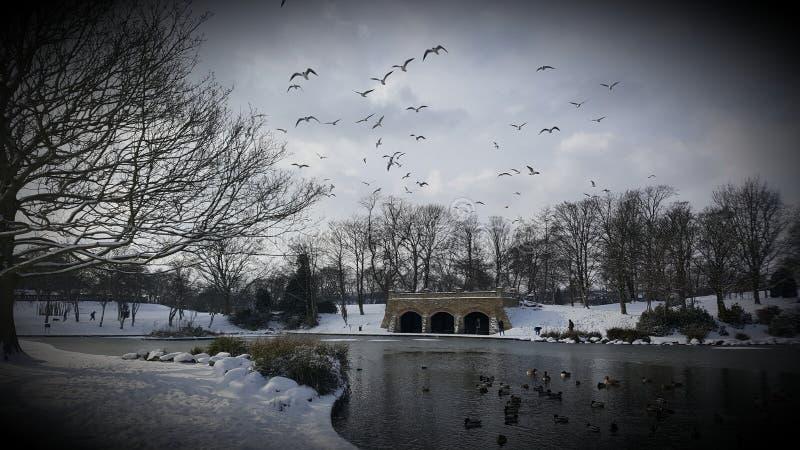 Greenhead公园鸭子池塘 库存图片