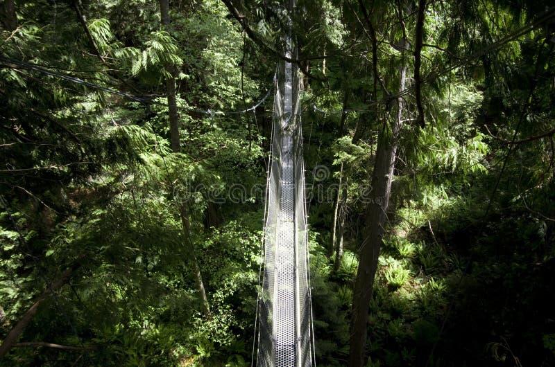 Ubc botanical garden Greenheart Treewalk Canopy walkway. The Greenheart TreeWalk will spark your adventurous spirit as you navigate suspended walkways and tree stock image