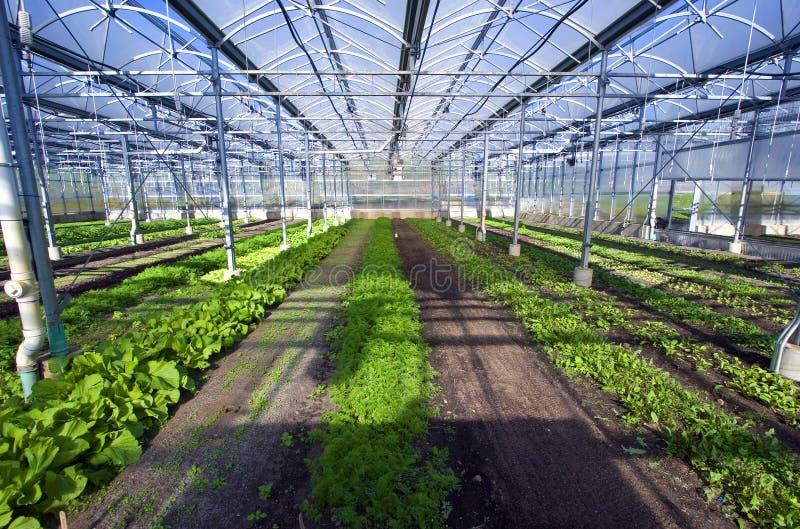 Greenhouse 1 royalty free stock photos