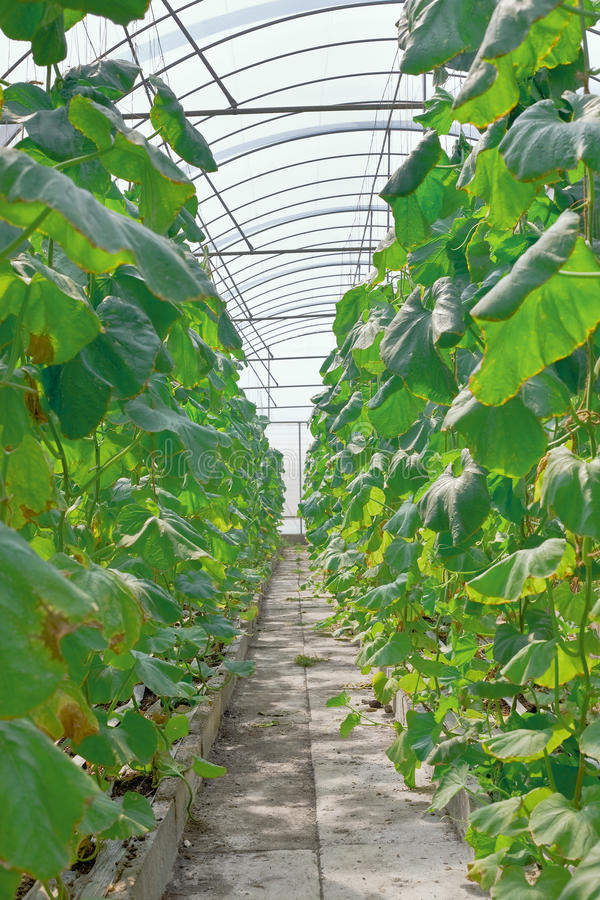 Download Greenhouse Stock Photo - Image: 16780620