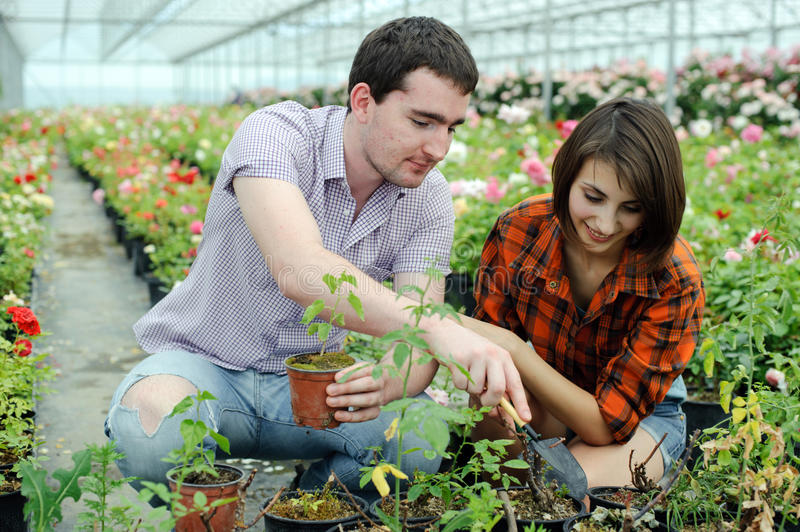 In a greenhouse stock photo