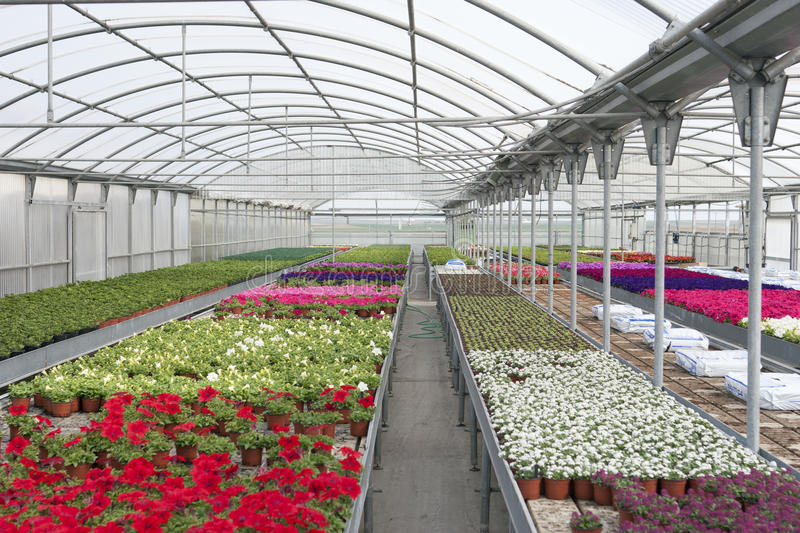 Greenhouse stock image