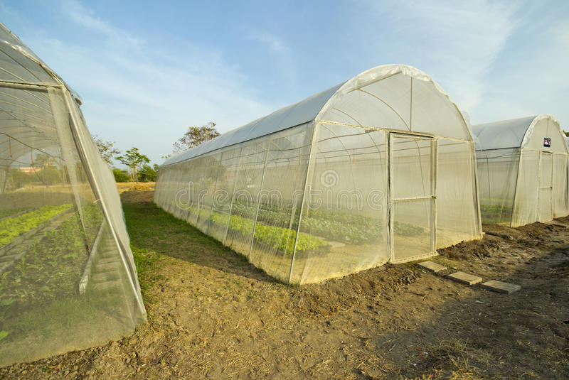 Download Greenhouse stock photo. Image of built, vegetable, inside - 25704546