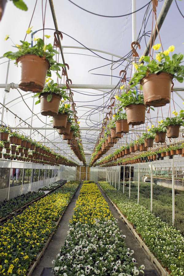 Greenhouse royalty free stock photography