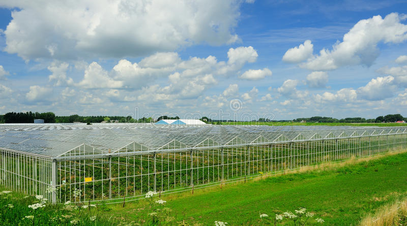 greenhouse photo libre de droits