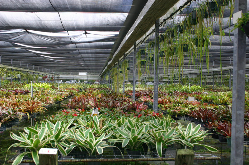 Greenhouse. Of bromeliads royalty free stock image