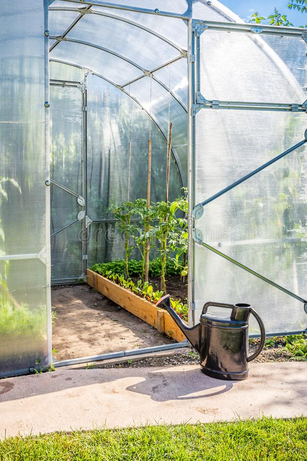 Greenhouse in back garden with open door and bailer. Greenhouse in back garden with open door stock images