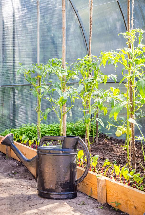 Greenhouse in back garden with open door and bailer royalty free stock photography