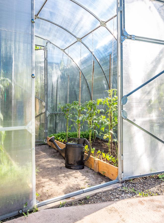 Greenhouse in back garden with open door and bailer. Greenhouse in back garden with open door royalty free stock image