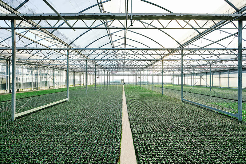 The greenhouse with cloudy sky royalty free stock photo