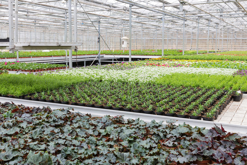 Greenhouse with cultivation of several plants and flowers stock images