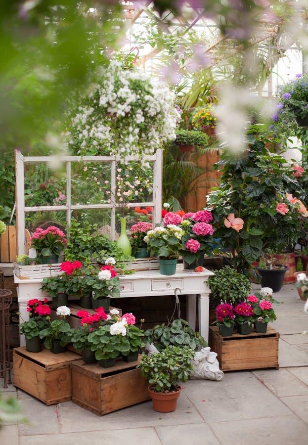 Greenhouse Display stock photo