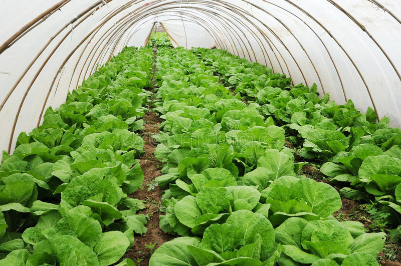 Download Greenhouse Farming Stock Photos - Image: 19070203