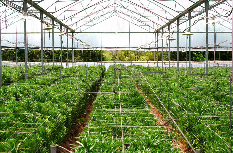Download Greenhouse Farming Stock Images - Image: 742784