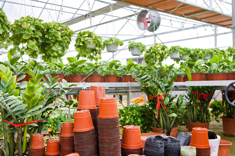 Download Greenhouse for flowers stock photo. Image of green, agriculture - 25891114