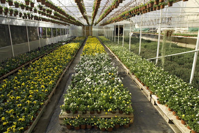Greenhouse with flowers royalty free stock photos