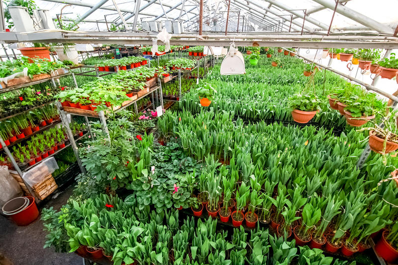 Greenhouse full of flowers. royalty free stock photography