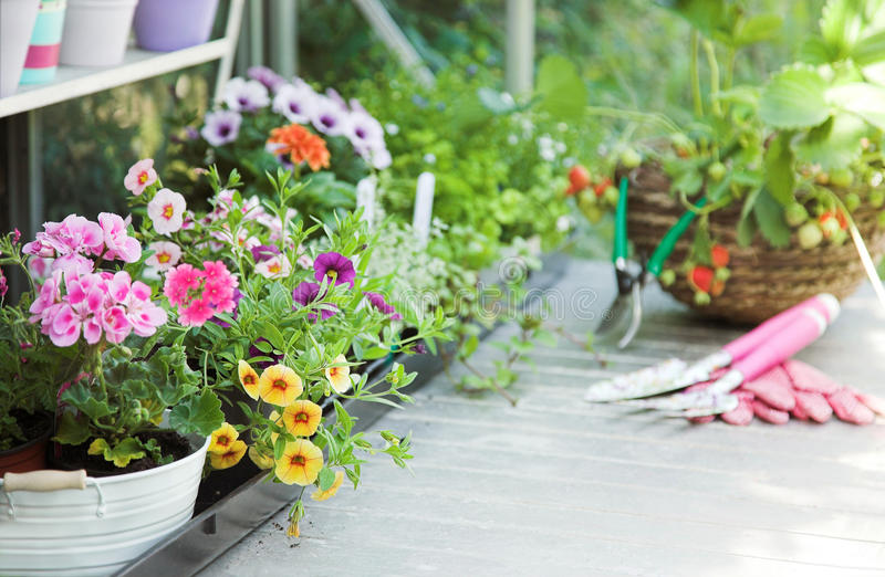 Greenhouse full of flowers, fruits, herbs stock image