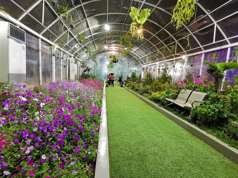 Greenhouse with full of flowers In a nice and cozy place royalty free stock photo