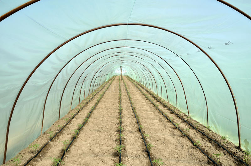 Greenhouse and garden beds of tomato royalty free stock photography