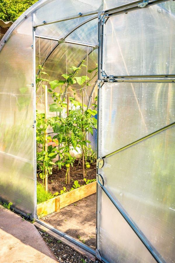 Greenhouse in the garden with oped door stock images